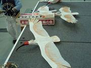 2009年10月10日 - zhuhuanainiao - 朱鹮爱鸟协会