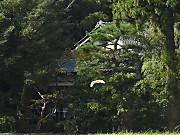 161006a1